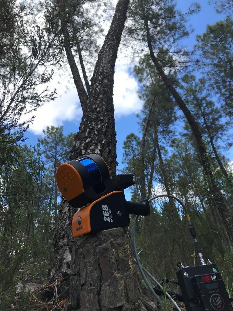 Instrumento de gestión forestal sostenible